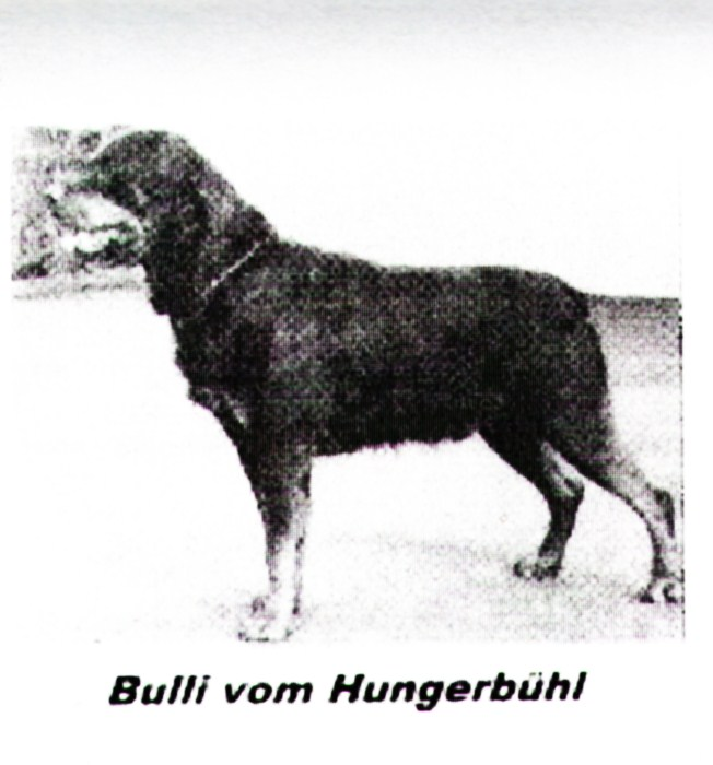 z Bulli vom Hungerbuhl.jpg