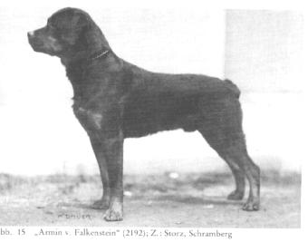 z-y-armin-v-falkenstein